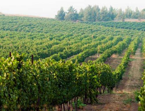 יין וטיולים